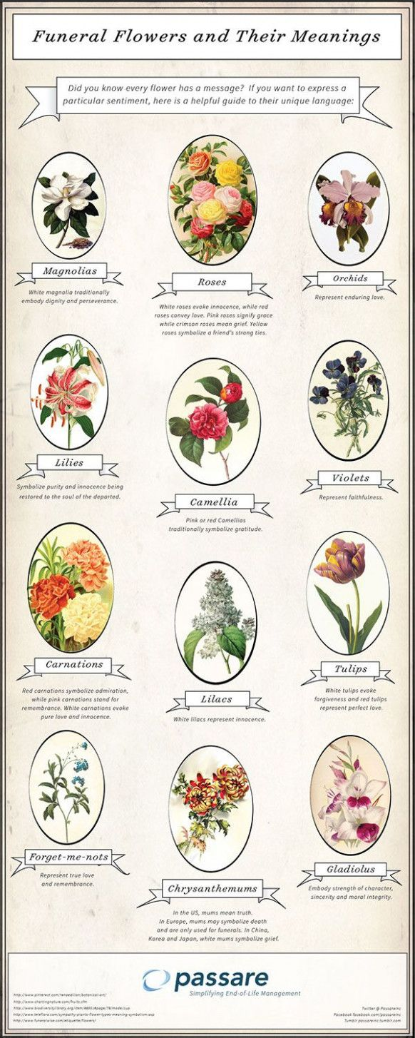 Seven Mind Numbing Facts About Flowers And Their Meanings Flowers And Their Meanings Https Ift Tt 2xdwnry Funeral Flowers Flower Meanings Funeral Planning