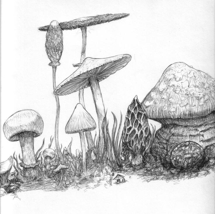 mushrooms, i love them :)