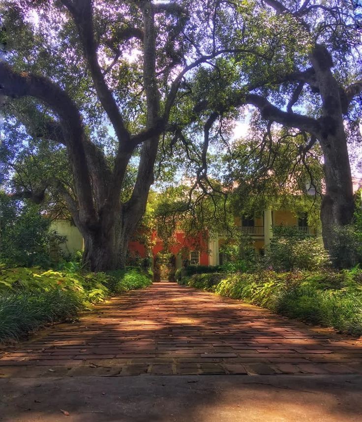 Things to do in South Louisiana 133