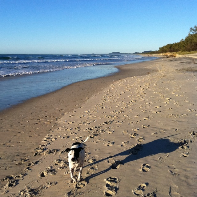 "Day 3 - photo in July ""best part of my day"".... Morning walks with Jack on Kingscliff Beach."