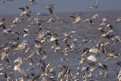 La sécheresse dans la corne de l'Afrique retarde les oiseaux migrateurs