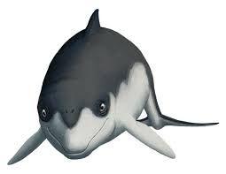 Janjucetus,uma especie extinta de baleia