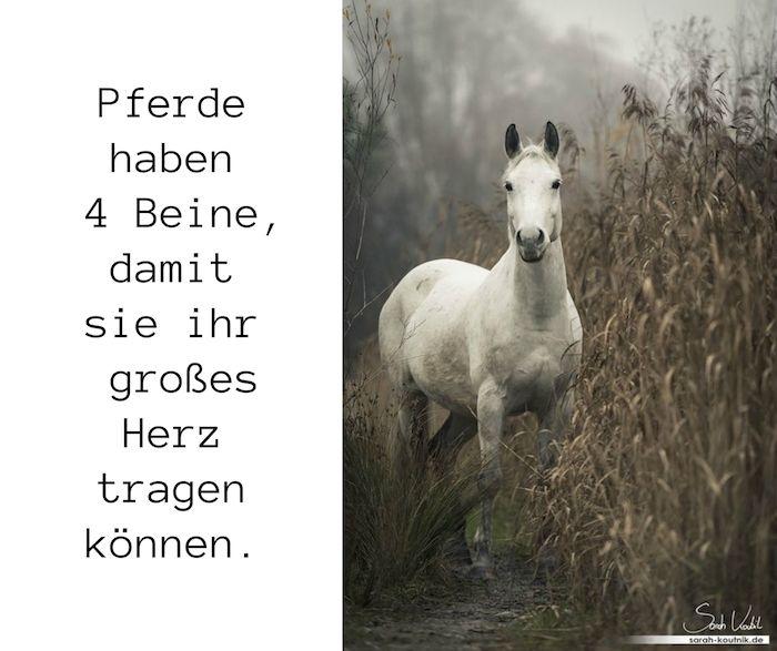 Pferdebilder Und Schone Pferdespruche Zun Nachdenken Hier Ist Ein Weisses Pferd Mit Schwarzen Augen Einer Weissen Mahn Pferdespruche Pferde Bilder Pferdebilder