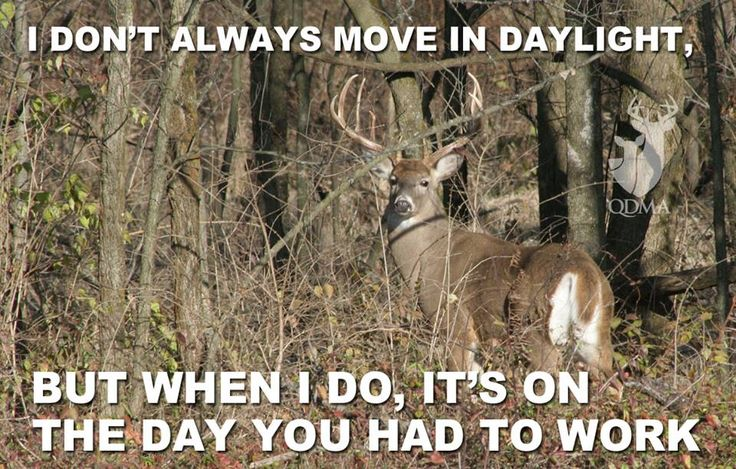 78 Best Images About Hunting Memes On Pinterest Deer