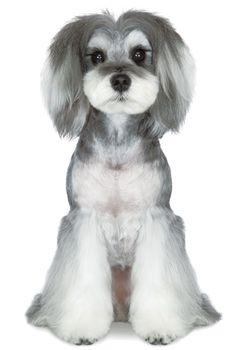 女子力アップなスタイル!+--愛犬の友 ヘアスタイルカタログ--