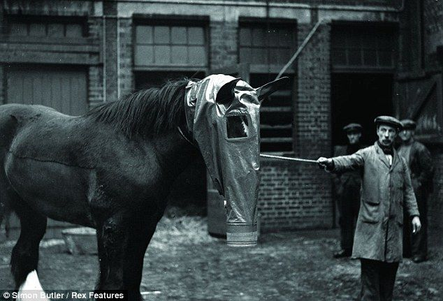 Total war: A British horse being fitted with an experimental gas mask