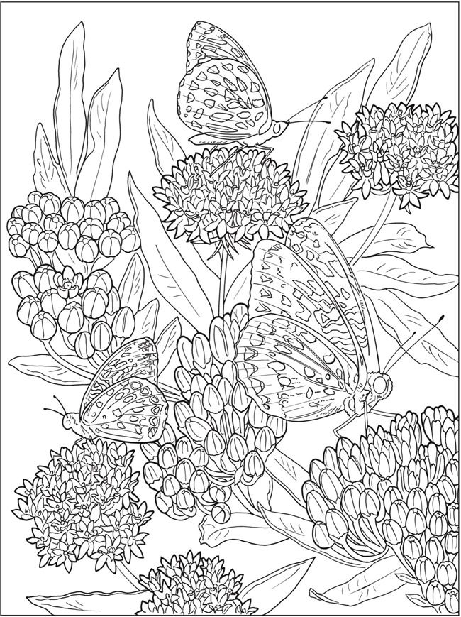 Creative Haven Beautiful Nature Designs Coloring Book butterfly ...