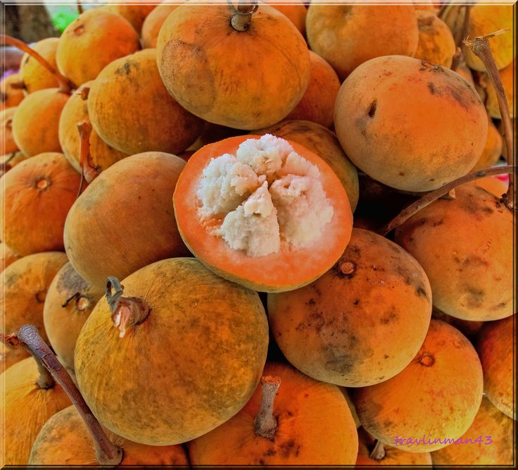 Santol: The santol is believed native to former Indochina and Peninsular Malaysia, and to have been introduced into India, Borneo, Indonesia, the Moluccas, Mauritius, and the Philippines where it has become naturalized. It is commonly cultivated throughout these regions and the fruits are seasonally abundant in the local markets