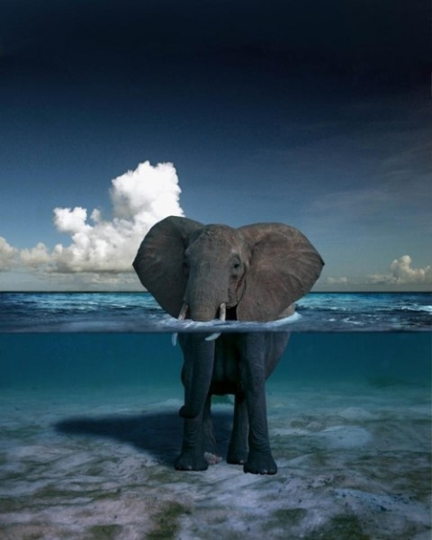 An elephant standing ear deep in a clear sea.  Other Comforting Contradictions at: http://www.zeitgeberenzyme.com