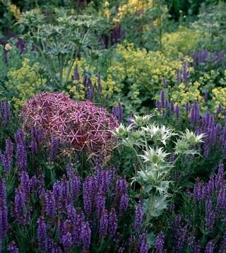 Salvia 'East Friesland', Allium christophii, Eryngium 'Miss Willmott's Ghost' and Alchemilla mollis - The Barn, Tom Stuart-Smith's Garden in Hertfordshire