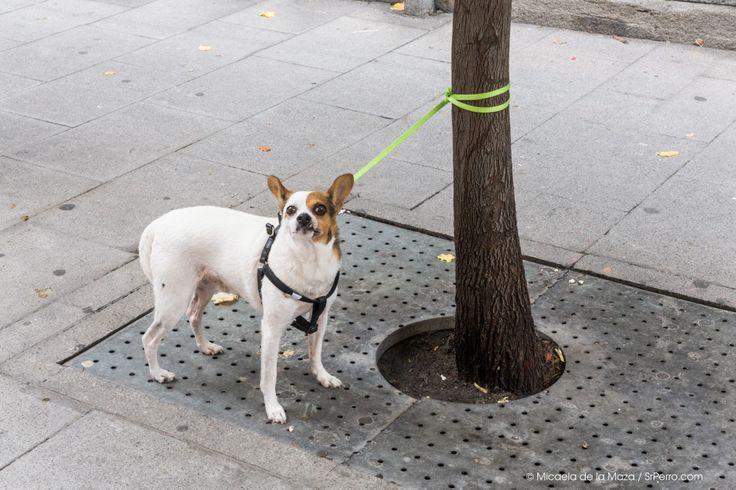 Dog Waiting, Montera, Madrid.