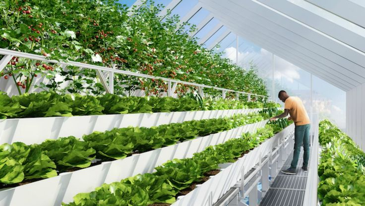 Rooftop aquaponic 'Farmlab' uses tilapia fish to grow edible plants