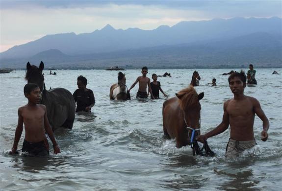 Jockey lead their horses after washing them at Kalaki beach, outside Bima, Indonesia, November 16, 2012.  REUTERS/Beawiharta