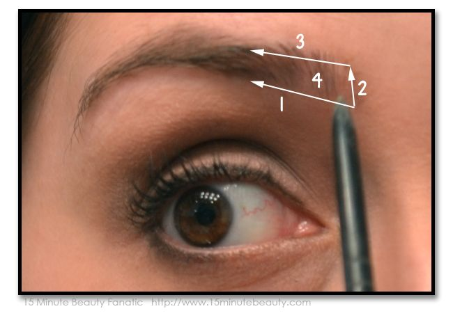 How to Fill in your eyebrows