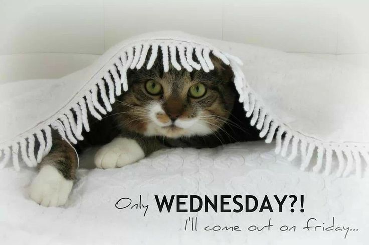 #cat #wednesday | ~(ˆ⌣ˆ~) Funny Cat (~ˆ⌣ˆ)~ | Pinterest ...