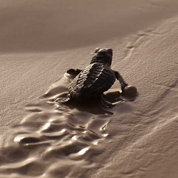 baby sea #turtle Twitter / Recent images by @Interior