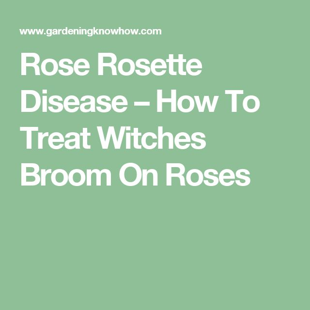 Rose Rosette Disease – How To Treat Witches Broom On Roses