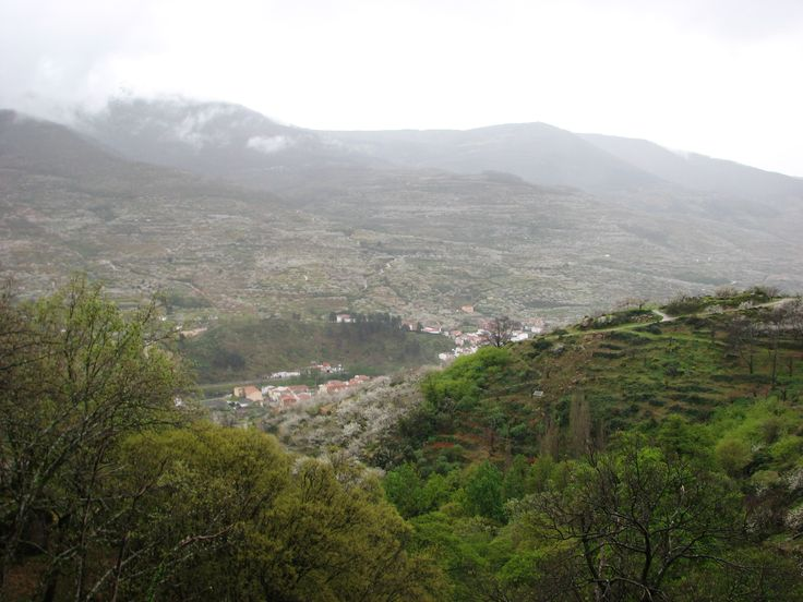 Nublados, verdor, Cerezos en flor, Navaconcejo al fondo... ¡¡Qué suerte vivir en el Valle del Jerte!!