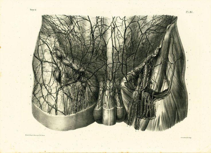 1836 Vaisseaux Ganglions lymphatiques de l'aine Planche Anatomique Bourgery, Poster Anatomie Medecine de la boutique sofrenchvintage sur Etsy