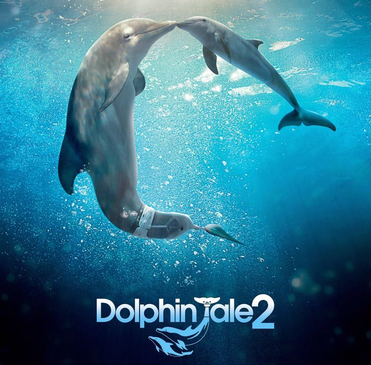 Dolphin Tale 2 Will Delight Viewers