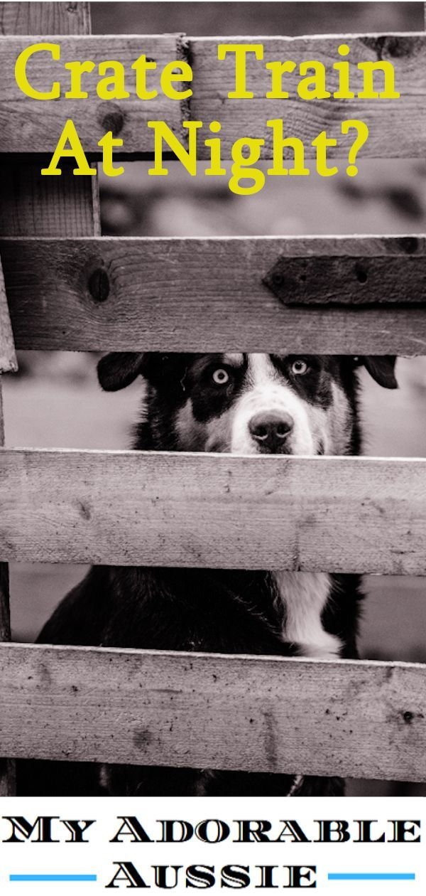 There Are Many Benefits For Crate Training Your Dog Especially At