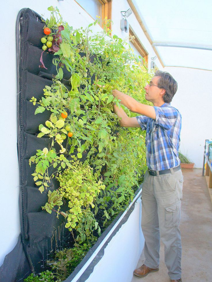 5 vertical vegetable garden ideas for beginners