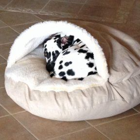 no dog or pet can resist the enveloping comfort of the cozy cave dog bed - Cozy Cave Dog Bed
