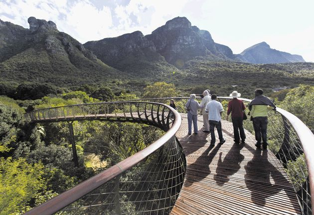 A swaying walkway amidst the tree tops of world-famous Kirstenbosch National Botanical Garden in Cape Town has been officially opened to the public to market the park's centenary - done