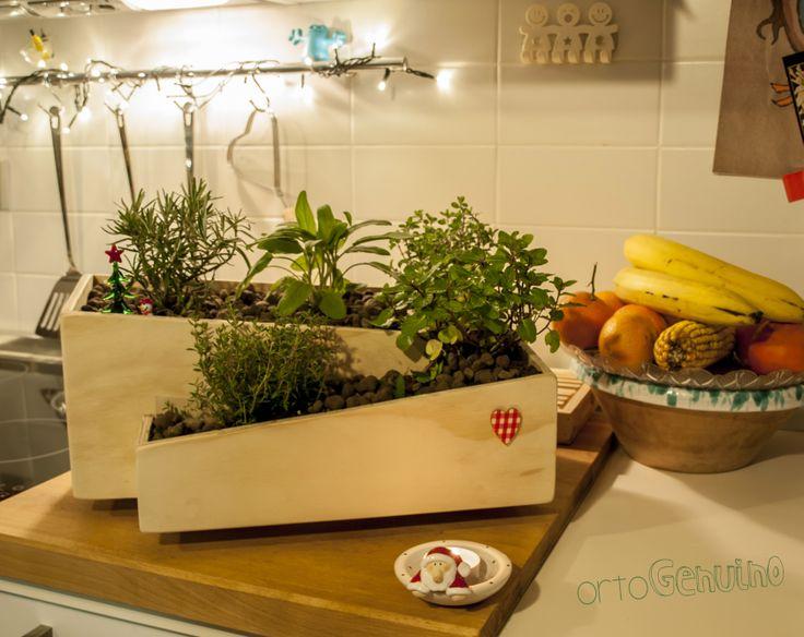 Ortolino - mini orto di piante aromatiche