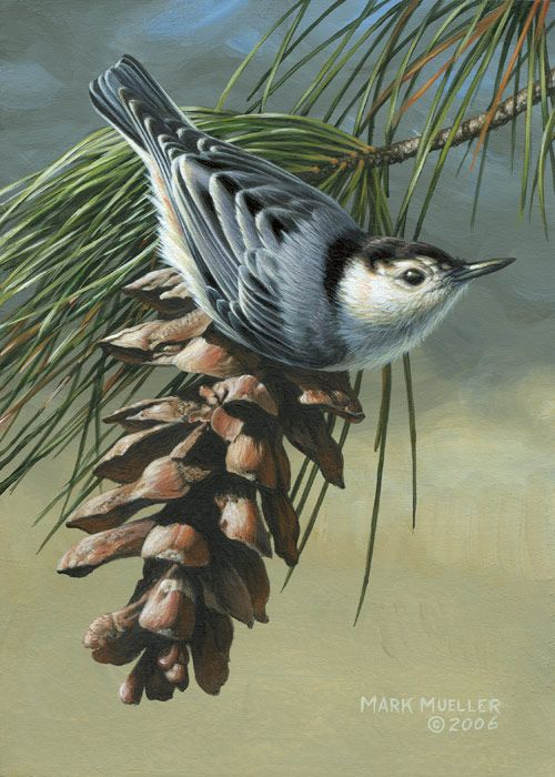 Acrylic painting - White-breasted Nuthatch painting by Mark Mueller