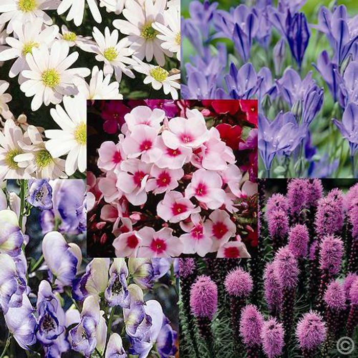Cottage perennial garden - 35 plants Buy online order yours now