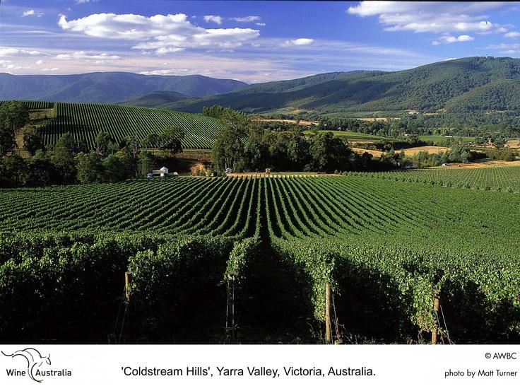 Yarra Valley vineyards australia