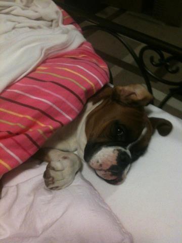 Mom, I don't wanna get up...