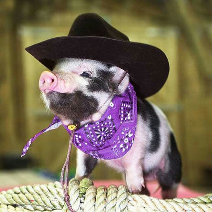 Pig with purple bandana
