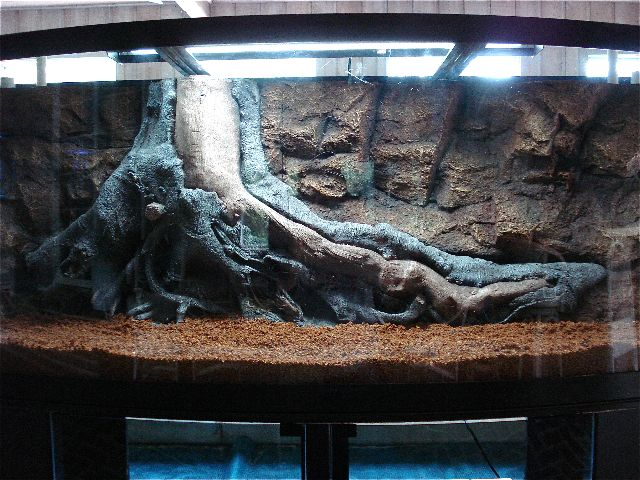 38 best 3d background aquariums images on pinterest fish for Fish tank background ideas