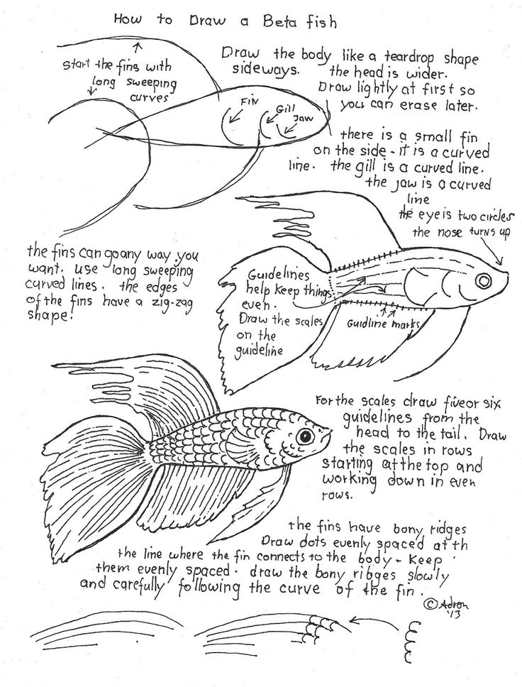 How to Draw Worksheets for The Young Artist: fish