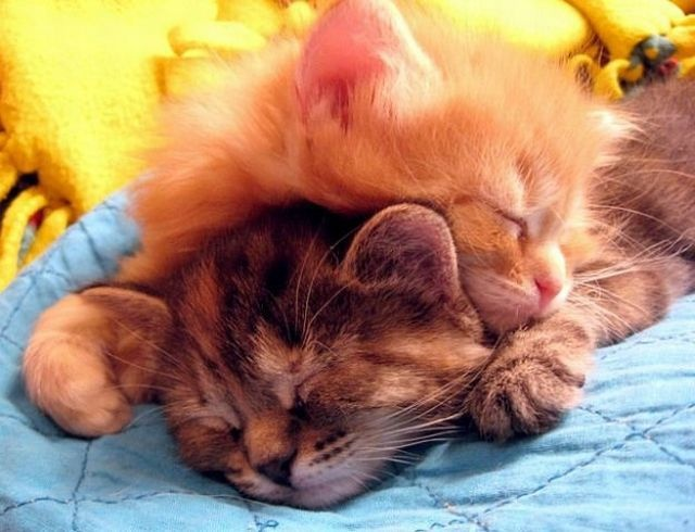 I can'tSnuggles Sleep, Funny Pics, Snuggles Time, Kittens Snuggles, Sleep Kittens, Funny Animal, Snuggly Kitty, C4Sleep Cat, Adorable Animal