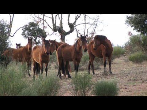 Spagna, tornano i cavalli selvatici in difesa della biodiversità