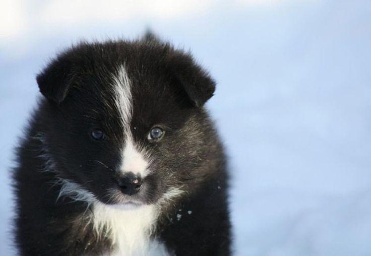 30 raças raras de cães que provavelmente você não conhece