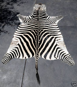 Zebra Skin Rug African | eBay $3620