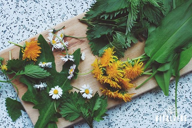 Czech Herbal Trio For Spring Cleansing - Vitalvibe
