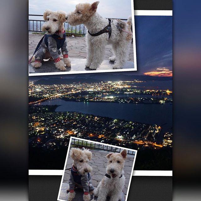 Instagram【cocosakura3】さんの写真をピンしています。 《はーい🙋📸こっち見て〜 こちょこちょ何話してるの? 🐶💕🐶ココちゃんお耳かして〜 後で一緒に夜景見ようよ ちゅうたんくすぐったいよ💦 @chichichi224 #date#デート#夜景#nightview #屋島#うどん県#散歩#walk#terrier#happydog#wirefoxterrier#dog#instadog#犬と暮らす#ワイアーフォックステリア#ワイヤーフォックステリア#犬#わんこ#ファインダー越しの私の世界#テリア#instapet#instapic#instagramjapan#かわいい#ふわもこ#instaterrier#kawaii #pecoいぬ部》