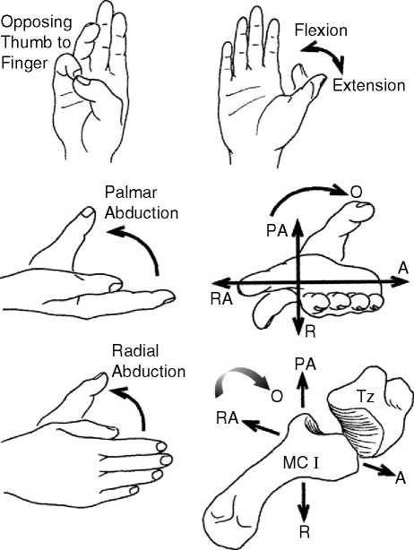 measuring thumb range of motion