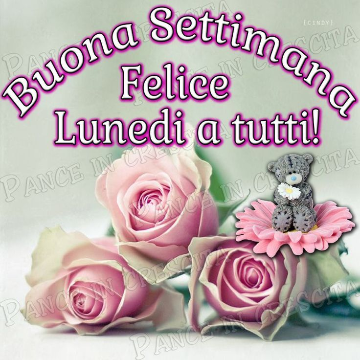 Amato 212 best Buon Lunedi images on Pinterest | Blossoms, Flower and  CG01