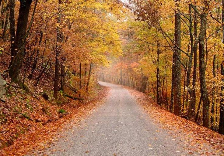 Chemin de Saint Jacques en automne
