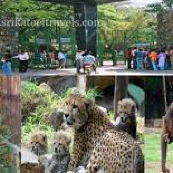 6c8a0a3e6e5e2e2171622a2d78ffafa8 - Mysore Zoo Sri Chamarajendra Zoological Gardens