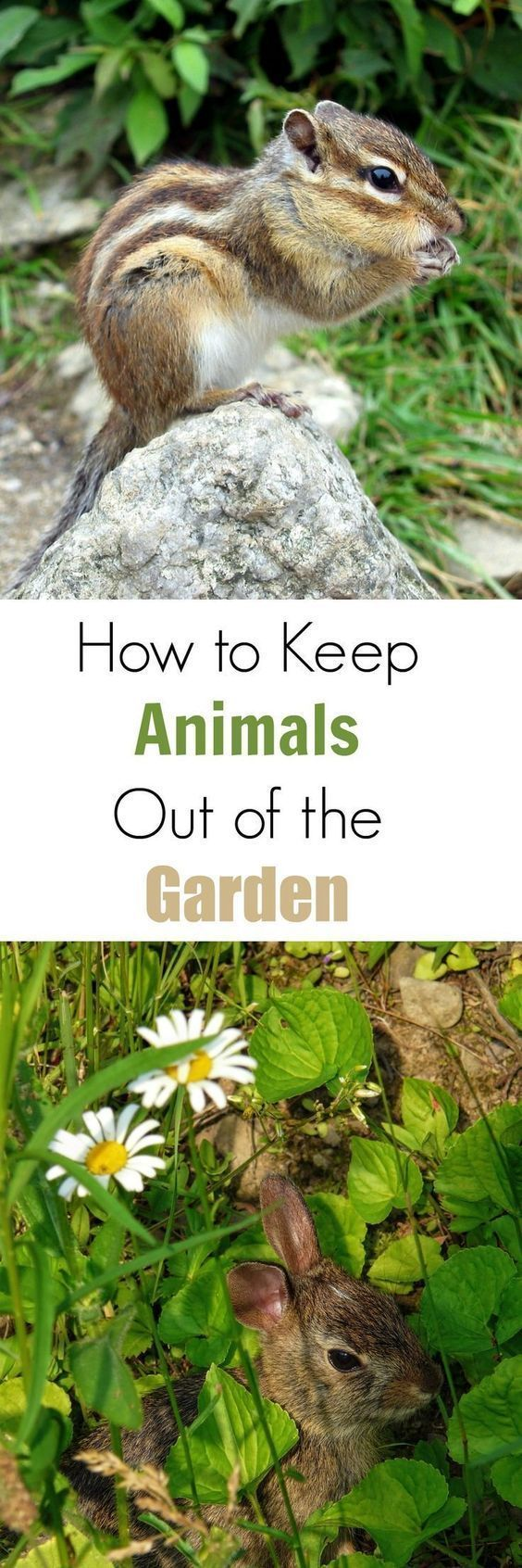 4919 best gardening tips inspiration images on pinterest for How to protect your garden from animals
