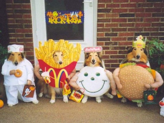 hope these funny dog halloween costumes will make you laugh description from funnypicacom - Dogs With Halloween Costumes On