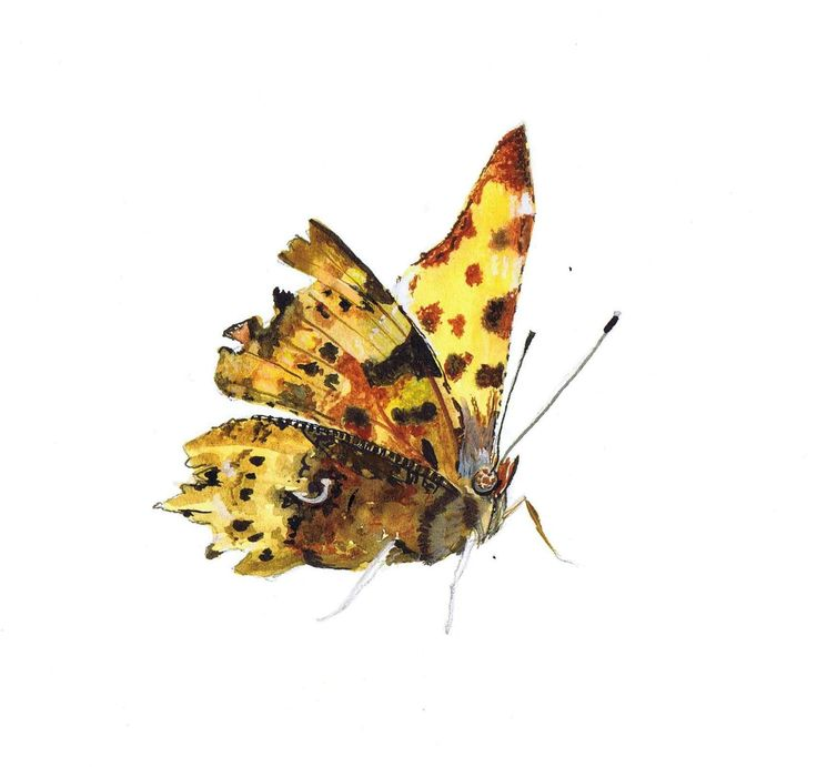 Realistic butterfly paintings - photo#38