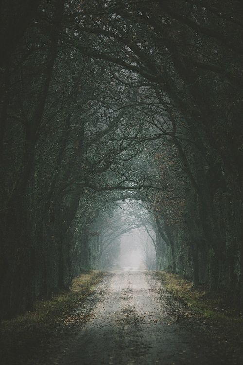 Gravel avenue By Mikael Sundberg